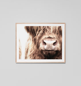 HIGHLAND COW NOSE FRAMED ARTWORK