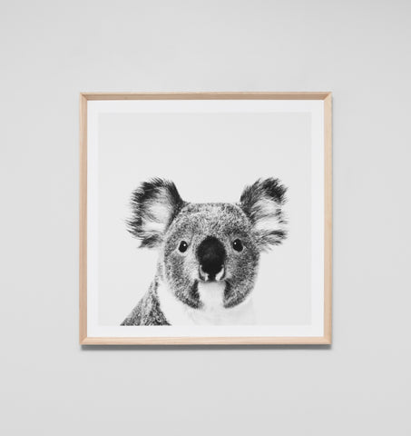 KOALA PORTRAIT FRAMED ARTWORK