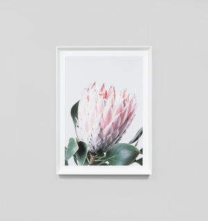 NATIVE PROTEA FRAMED ARTWORK