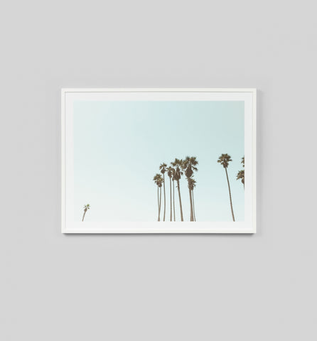 PALM SKY FRAMED ARTWORK