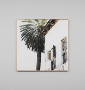 PALM WINDOW SQUARE - FRAMED CANVAS PRINT