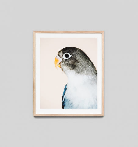PARROT 2 FRAMED ARTWORK