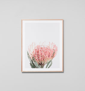 PROTEA BLOOM BLUSH FRAMED ARTWORK