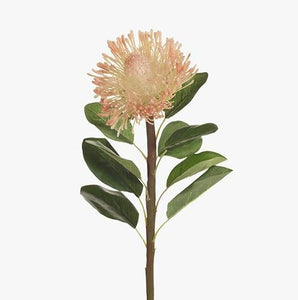 PROTEA LEUCO STEM - GREEN