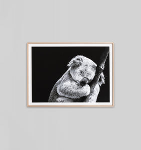 SLEEPY KOALA FRAMED ARTWORK