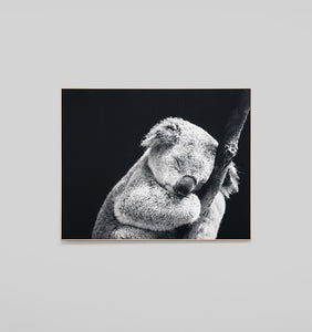 SLEEPY KOALA - FRAMED CANVAS PRINT