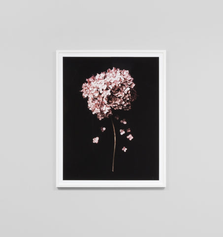 SOFT BLOSSOM FRAMED ARTWORK