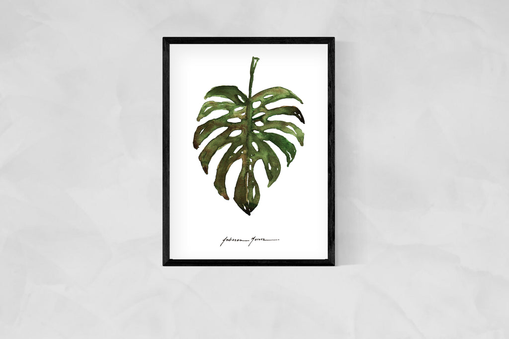MONSTERA (COSTELA DE ADÃO)