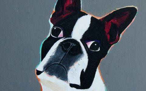 Big Boston terrier attitude original print 8x10