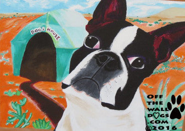 boston terrier, desert dogs
