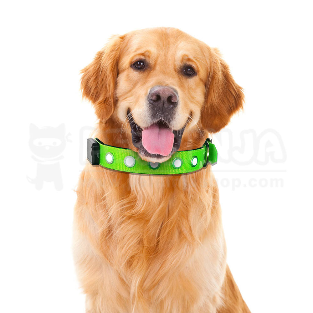 Adjustment LED Pet Night Safety Visible Collar