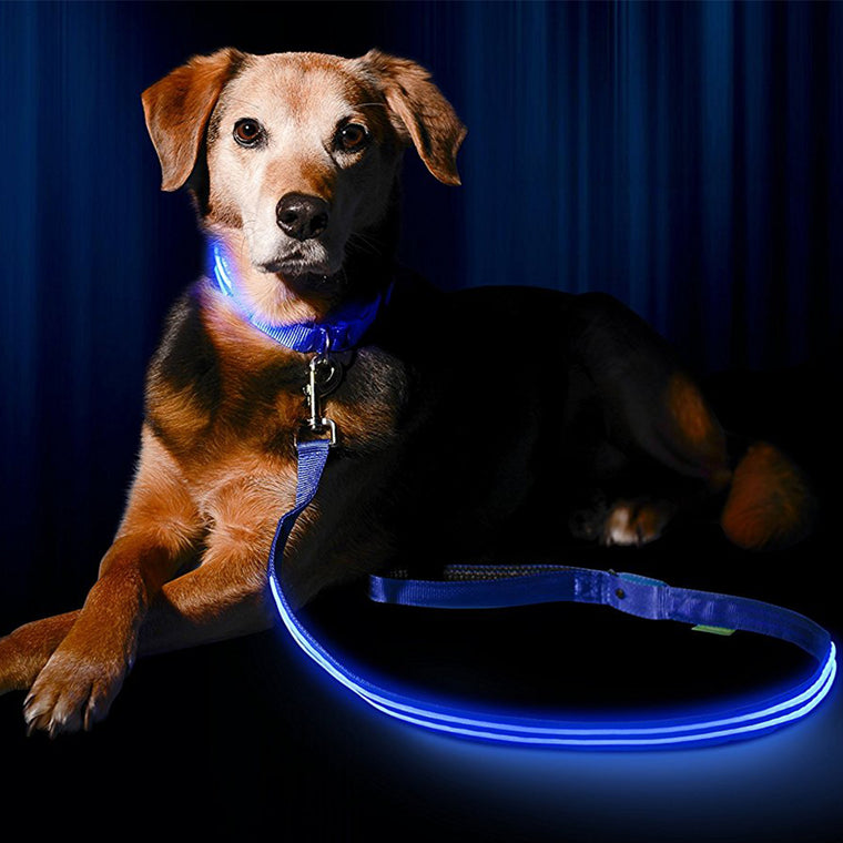 Premium Quality LED Dog Leash-Makes Your Dog Visible, Safe & Seen