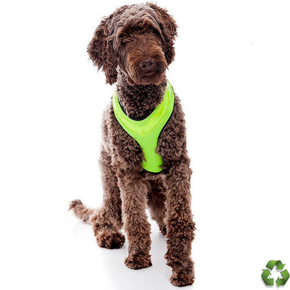 Revolutionary Illuminated and Reflective Harness for Dogs