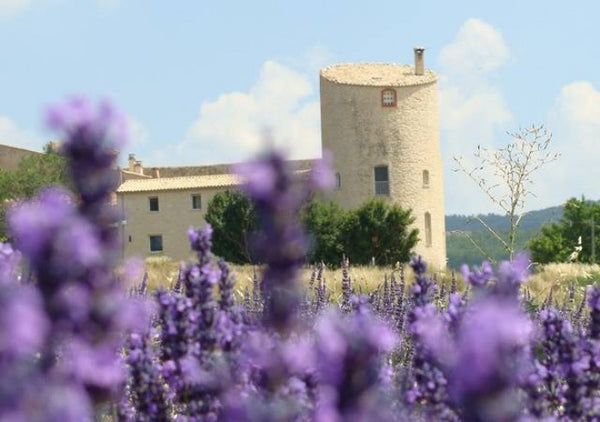 Chateau de la Gabelle Lavender available in the UK