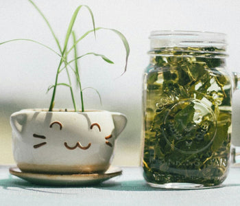 Benefits Of Green Tea For Skin