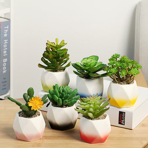 6 piece Ombre Ceramic Plant Set
