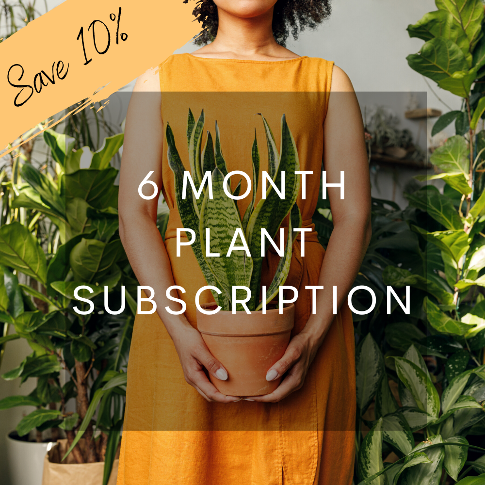6 Month Plant Subscription