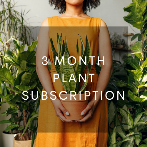 3 Month Plant Subscription