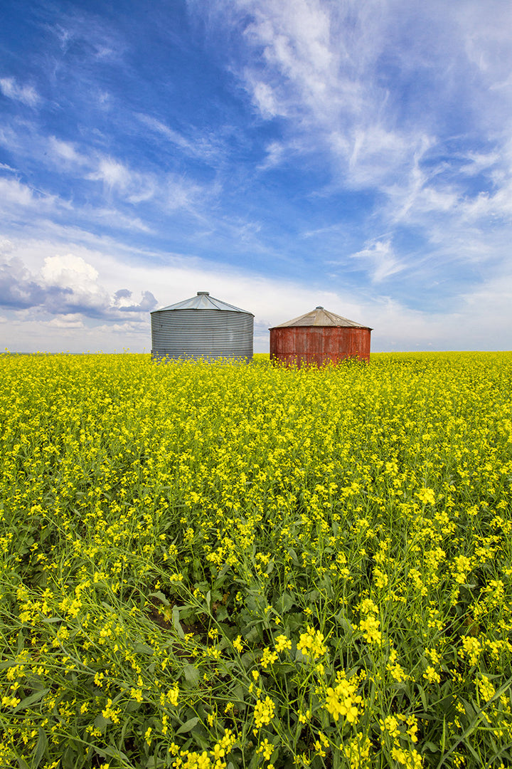 Red bin and canola during summer in Saskatchewan