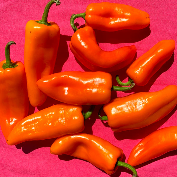 Produce Spotlight: Corno Di Toro Pepper