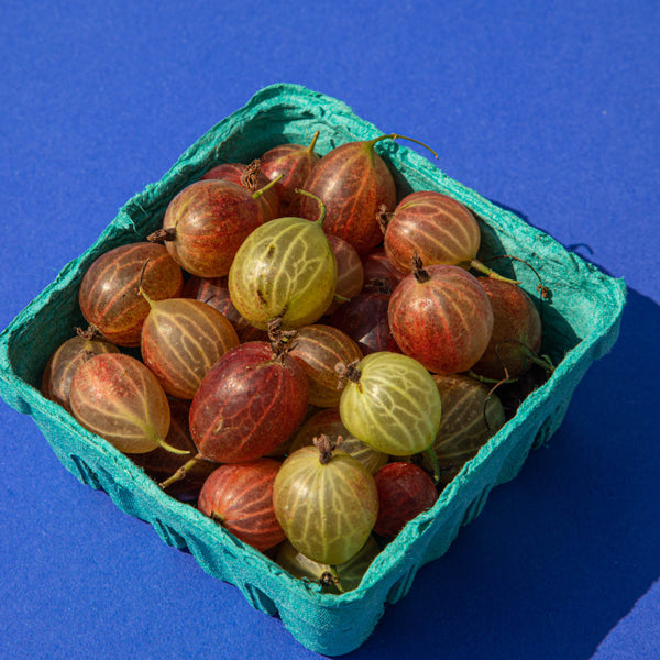 Produce Spotlight: Gooseberries