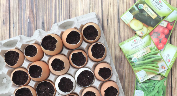 10 Ways to Use Eggshells
