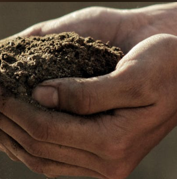 The Soul of Soil: Reversing Climate Change