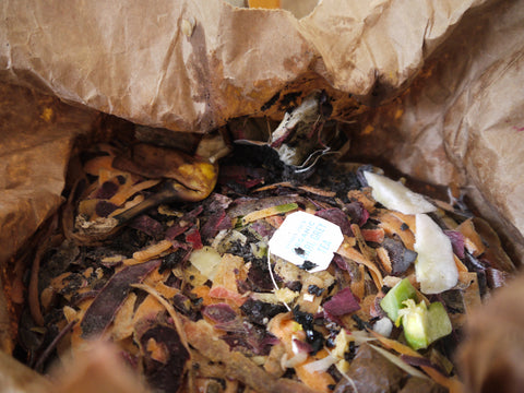 How to Start Composting (in a Tiny NYC Apartment) - Local