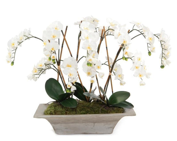 ARMATURE ORCHIDS - Donna's Home Furnishings in Houston