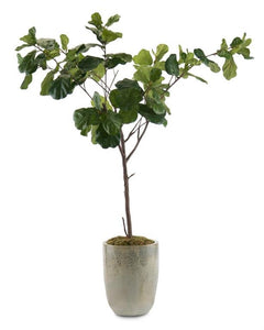 EGG URN FIG TREE - Donna's Home Furnishings in Houston