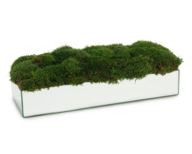 7X25X9 MIRROR/MOSS - Donna's Home Furnishings in Houston