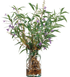 RUELLIA AND DRIFTWOOD