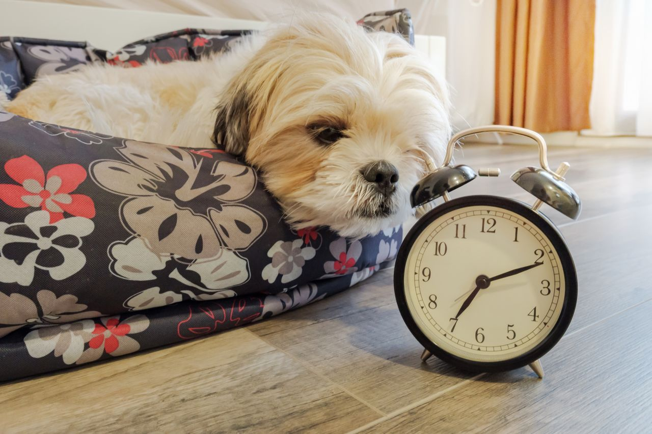 Do dogs understand the concept of time?