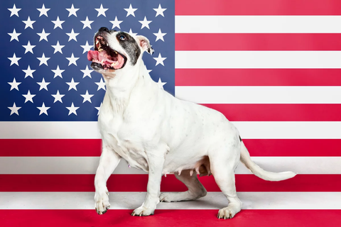 Dog in front of US flag
