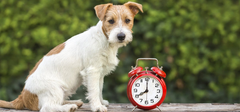 dog and time clock