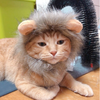 "Cute ""Tiny Lion"" Mane-Zaapy Pet"