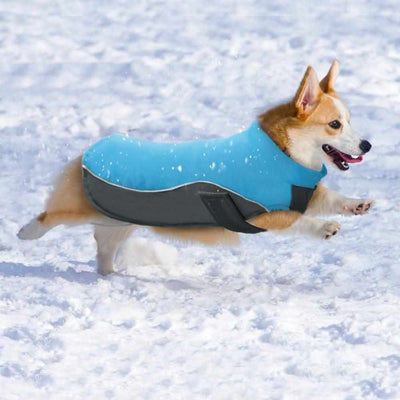 Super Swell Shell Pet Jacket-Zaapy Pet