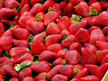 Late Season Strawberry Bare Root Plants 25 Count - Delicious MALWINA Roots - Longer Fruit yielding Season