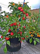 RootEase Soft Side Root Pruning Pots