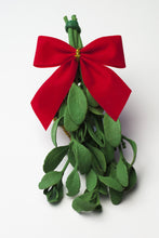 2PACK - Real Mistletoe Preserved Longer Lasting - FREE SHIPPING