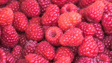 Raspberry Bare Root - 2 Plants - Polka Raspberry Plant Produces Large, Very Firm Berries with Good Flavor