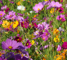 GSP Wildflowers Annuals Seeds - 1/4 lbs Seeds
