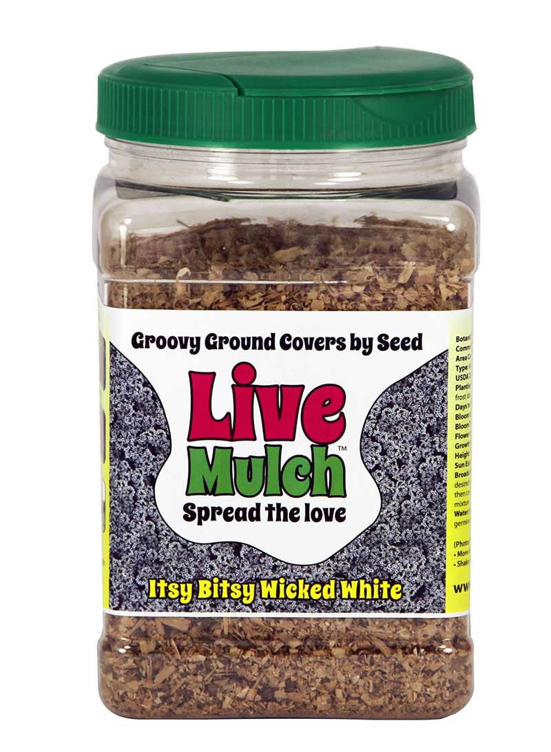 Live Mulch Itsy Bitsy Wicked White (Sweet Alyssum)