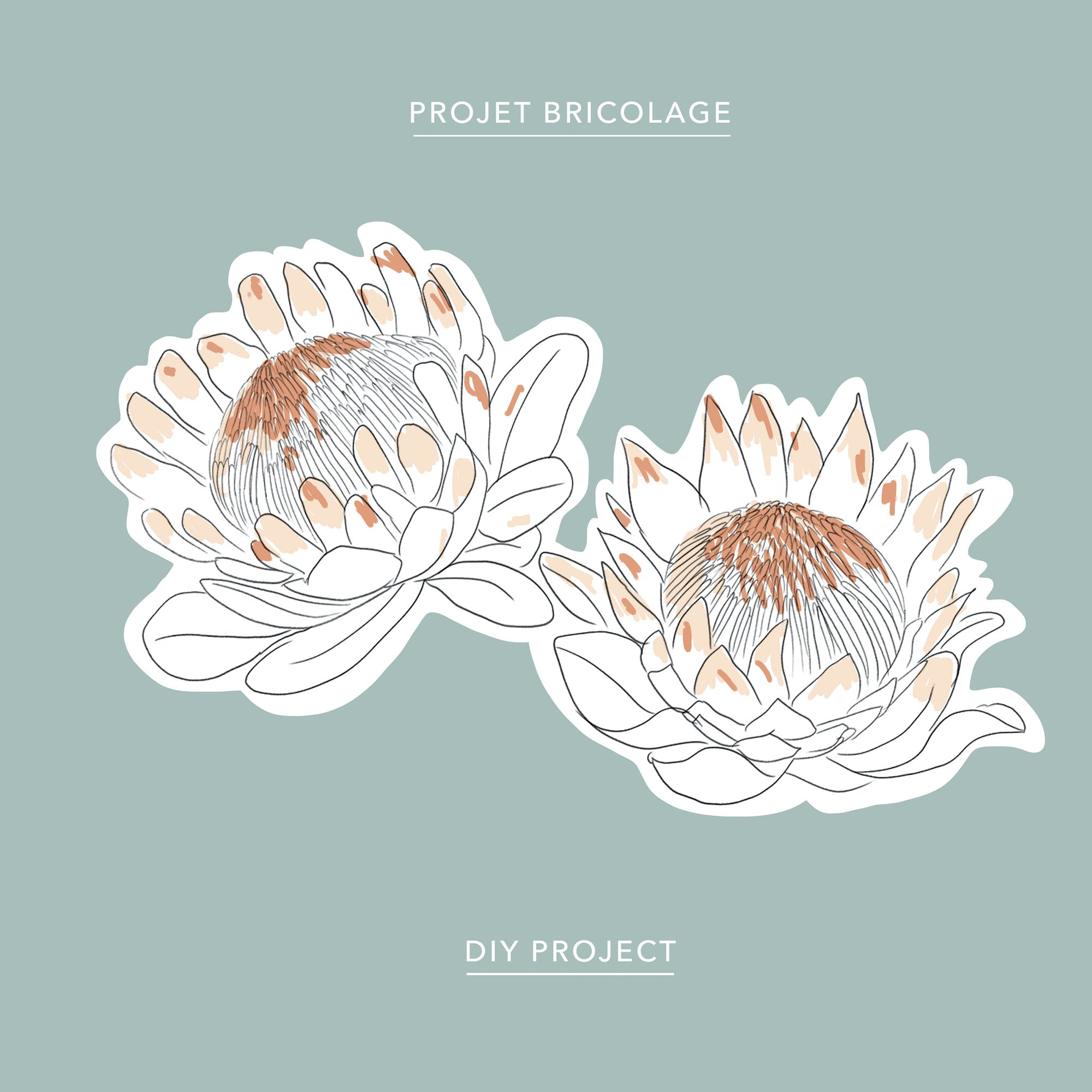 A free protea coloring sheet download, by the Baltic Club