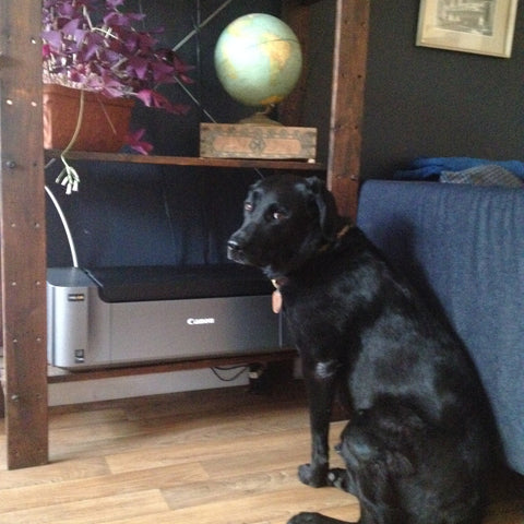 Lola looking  doubtfully at the new printer