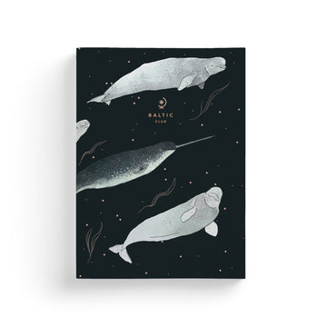 The Belugas Notebook