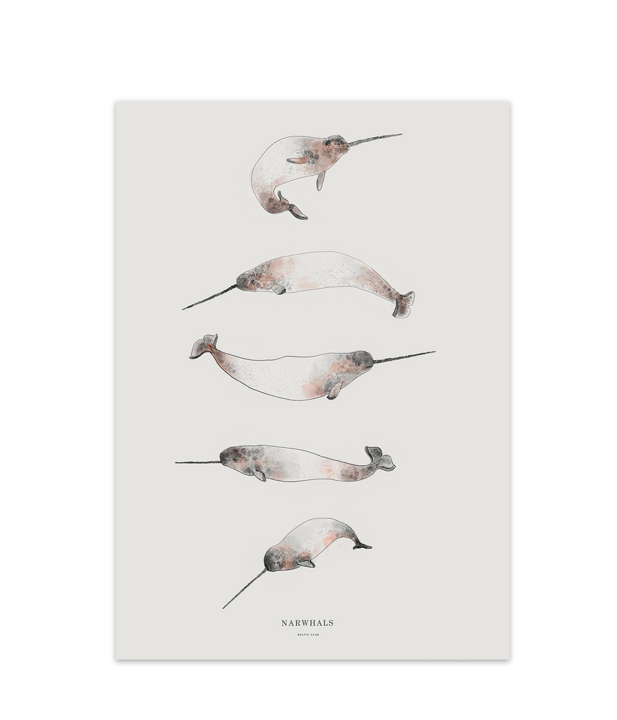 Narwhals Art Print
