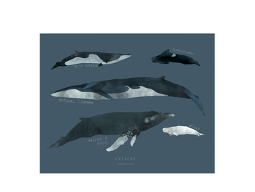 Cetacean Small Art Print