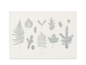 Laurentian Forest Art Print
