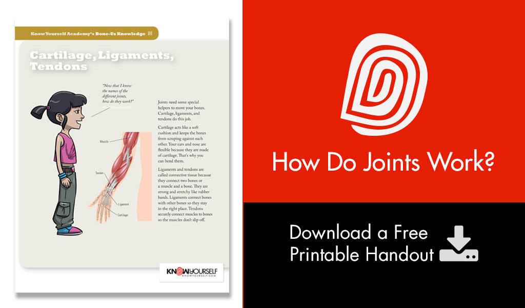 How Do Joints Work?